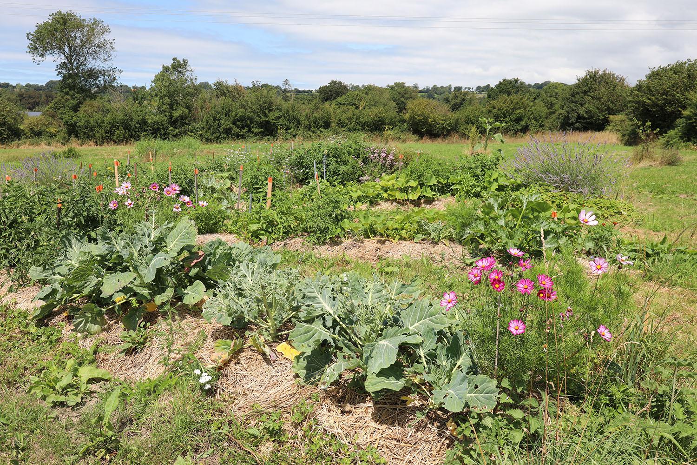 Permaculture jardin chambre d'hotes courcy coutances manche normandie